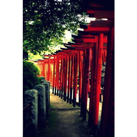 Le pont de tsutenkyo dans le jardin koishikawa korakuen for Jardin korakuen