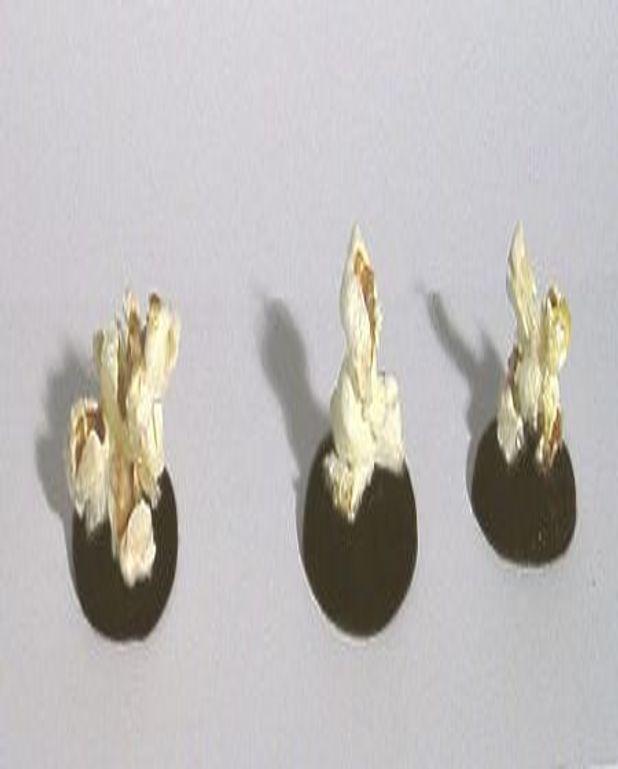 Brisures de maïs sur lit caramélisé