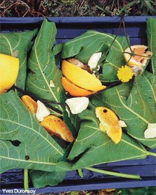 Figues rôties dans leurs feuilles