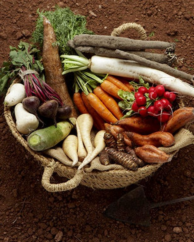 Jardinière de légumes en salade