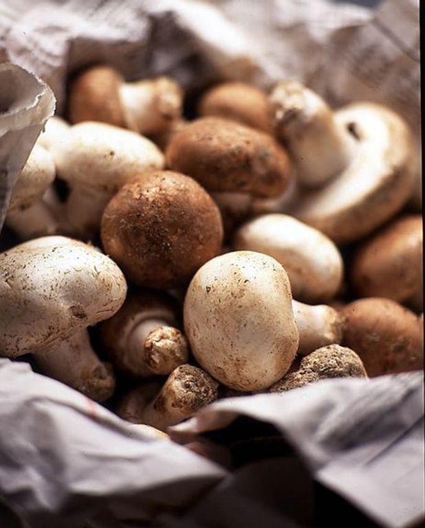Potage et purée aux champignons