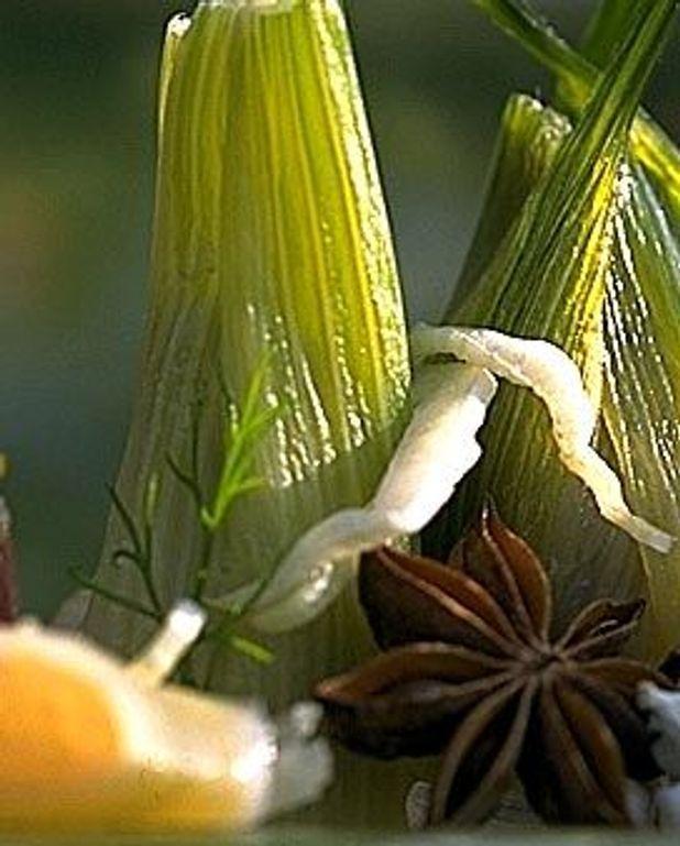 Salade d'agrumes et fenouil à la badiane