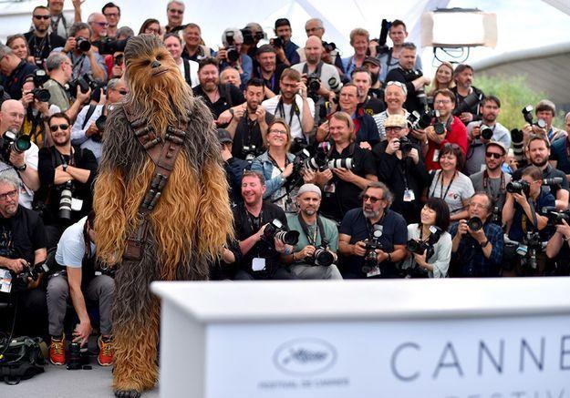 Chewbacca fait le bonheur des photographes