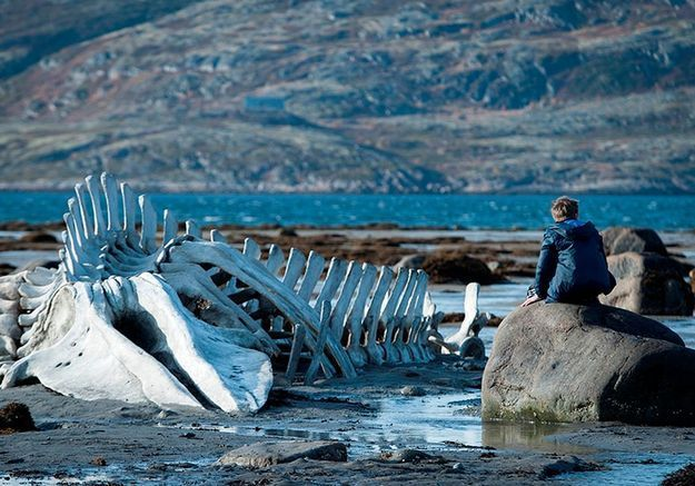 «Leviathan», d'Andrey Zvyagintsev