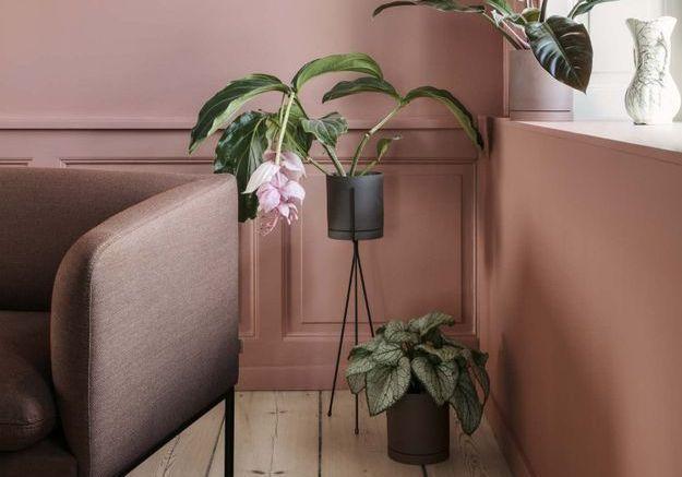 On offre quoi à un amoureux des plantes pour Noël ?