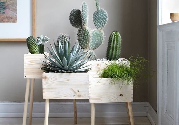 La Clinique des Plantes soigne vos végétaux et c'est gratuit !