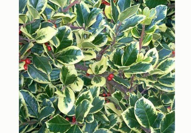 Quelles plantes et fleurs pour un jardin d hiver fleuri for Plantes et arbustes de jardin
