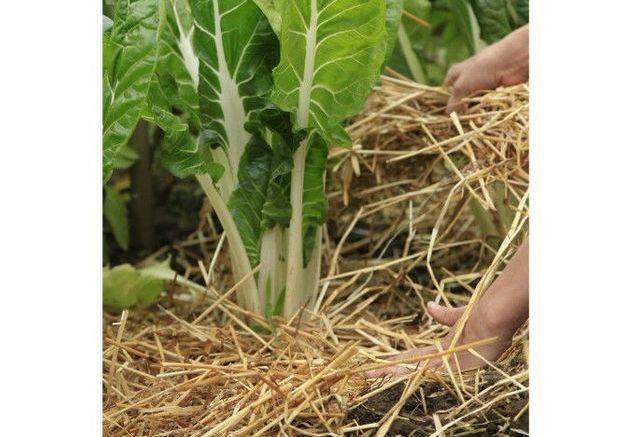 3. Protéger les plantes avant l'hiver