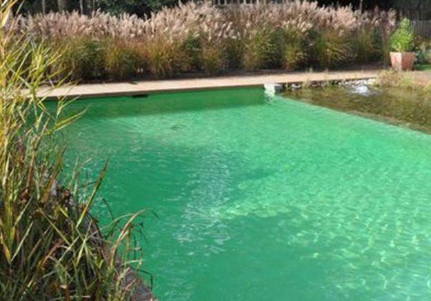 Tout savoir sur les piscines naturelles