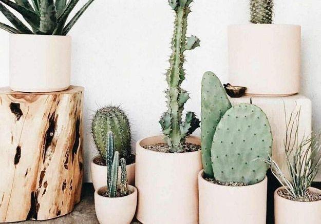 Choisir des cache-pots identiques accueillant différentes plantes pour créer une harmonie