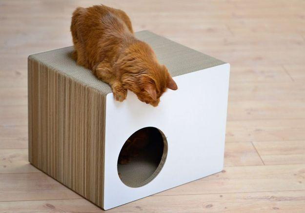 Maison pour animal Cat On