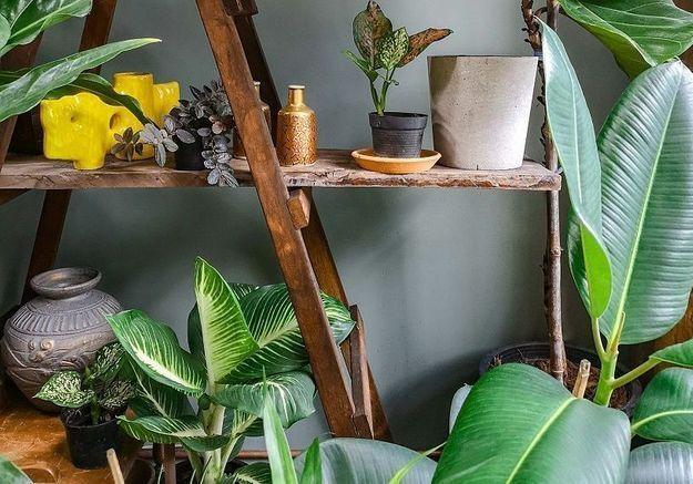 Canicule : 5 plantes d'intérieur pour garder votre maison fraîche