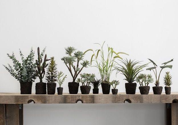 Les plantes nues…