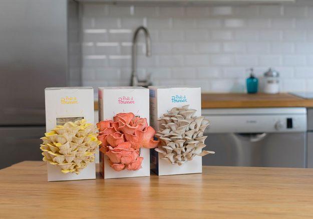 L'inspiration du jour : cultivez vos propres champignons en cuisine