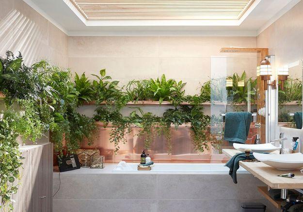 Multipliez les plantes dans la salle de bains