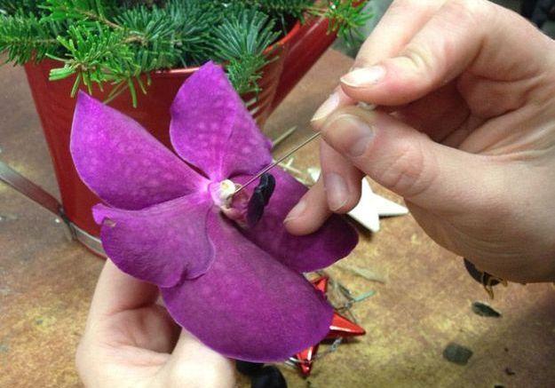 Ajouter les ornements végétaux