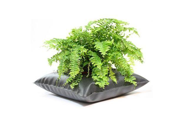 Green Pillow Alexis Tricoire