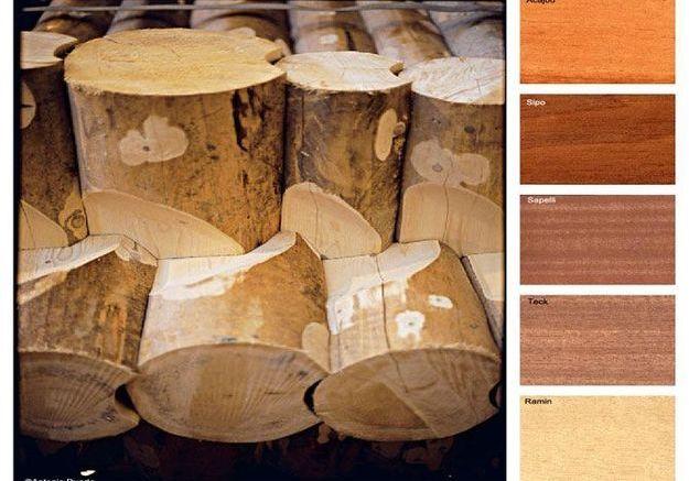 Des bois en danger d'extinction…