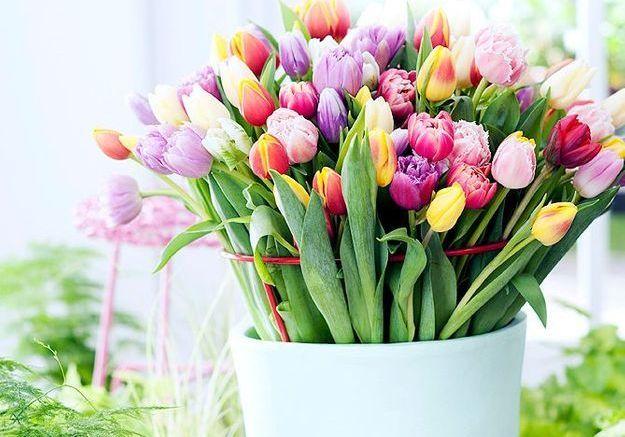 Si vous adorez la tulipe…