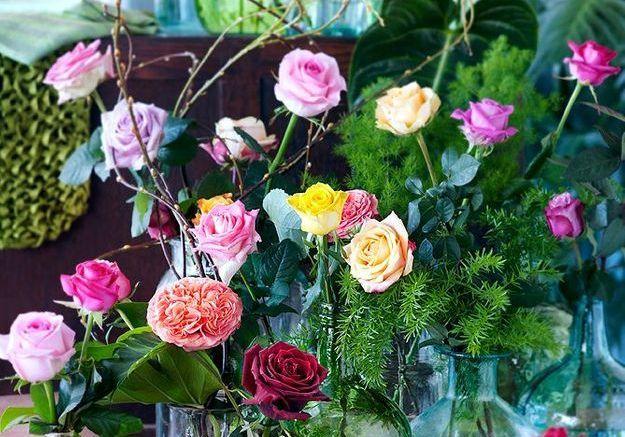 Si vous êtes fan de la rose…