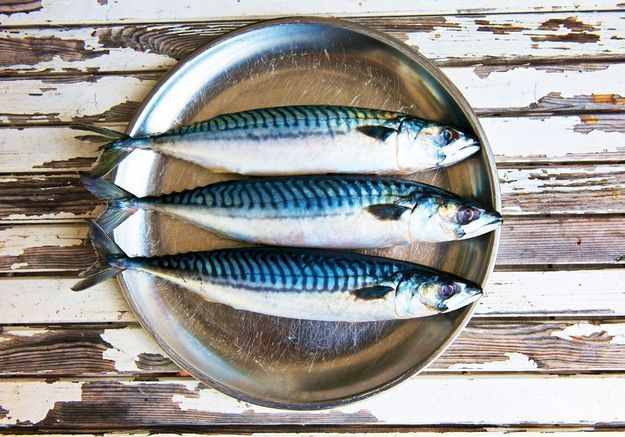 Coaching : 5 poissons pour les fauchés