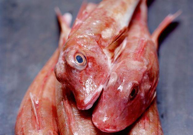 Les poissons oubliés