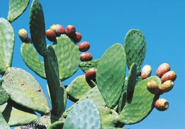 Est-ce que l'eau de cactus est la nouvelle boisson de l'été ?