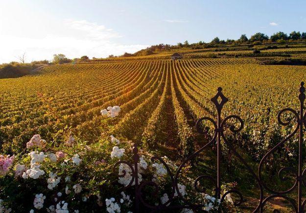 Automne : un week-end chic et nature en Bourgogne !