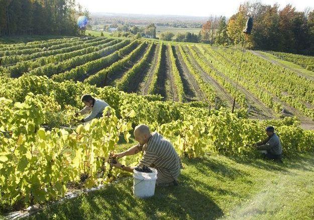 Siroter un vin façon méthode champenoise