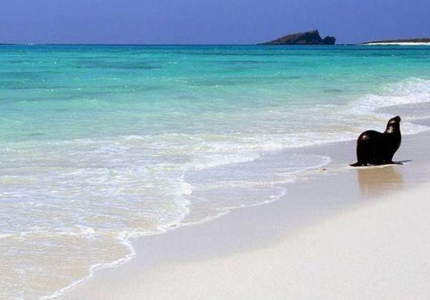 L'île Española, dans les îles Galápagos