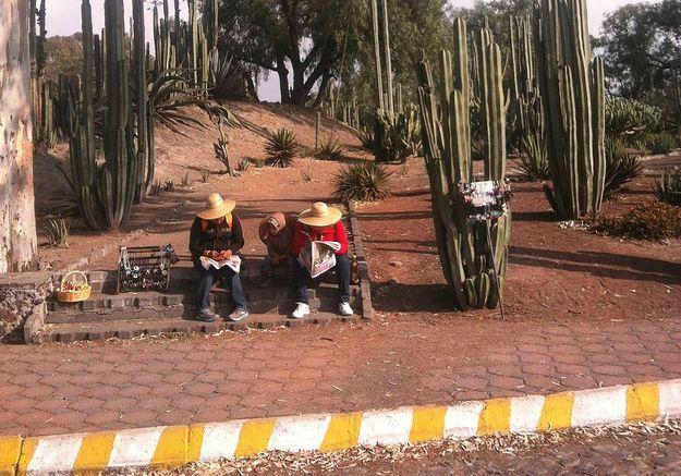 Mexique : sur les traces du papillon monarque