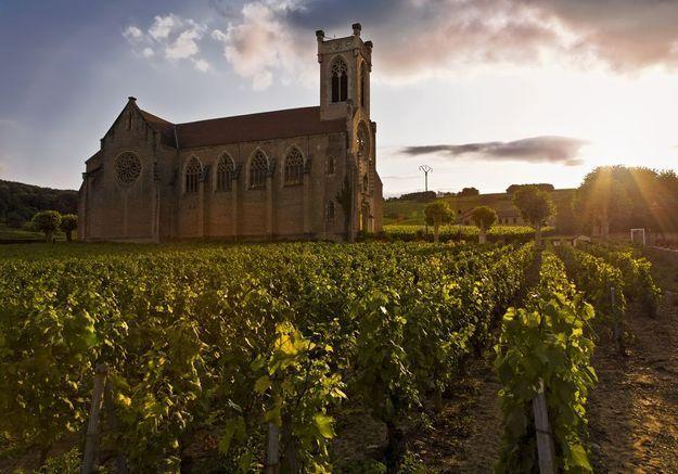 Le long des vignes de Fuissé, en Saône et Loire