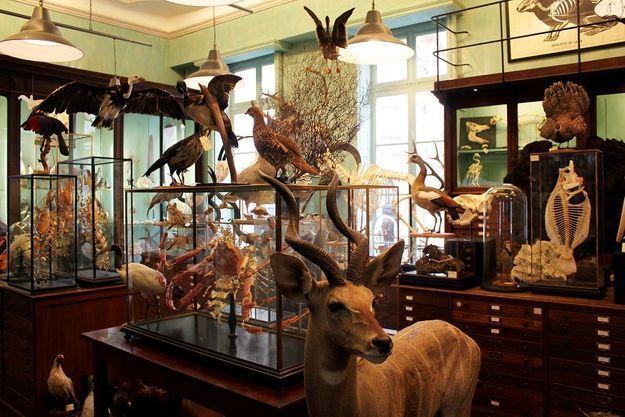 Le cabinet de curiosités Deyrolle