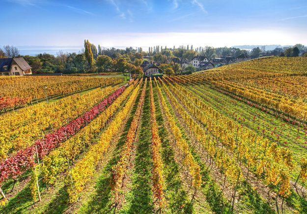 Les meilleurs hôtels de Provence pour écouter les grillons