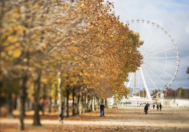 Que faire à Paris ce week-end du 10, 11 et 12 novembre ?