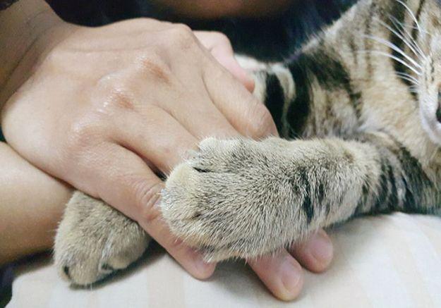 « Ça va, c'est juste un chat » : le deuil incompris des animaux de compagnie