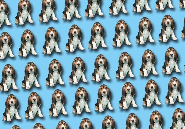 Rêver de chien : notre interprétation