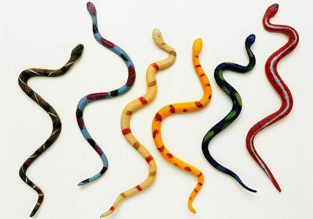 Rêver de serpent : notre interprétation