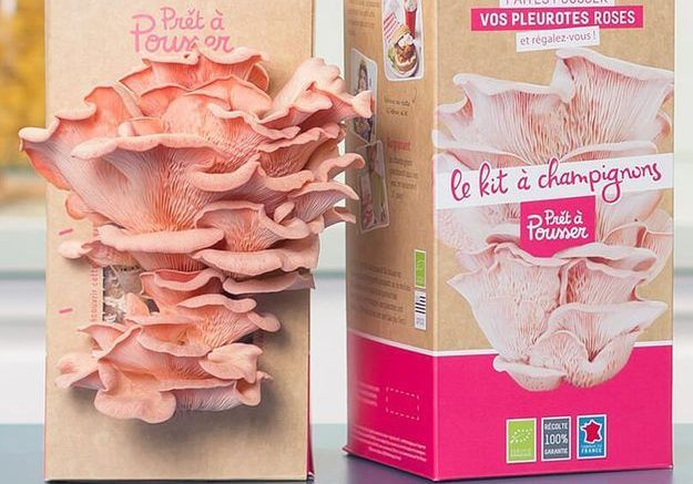 Kit pour faire pousser des champignons pleurotes roses
