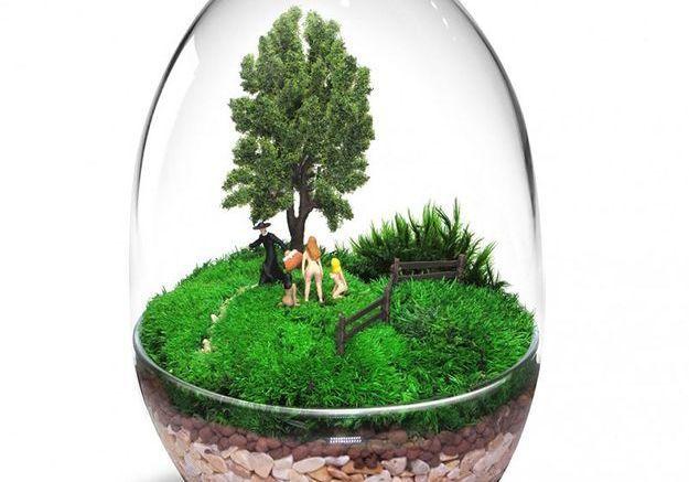 Un terrarium coquin