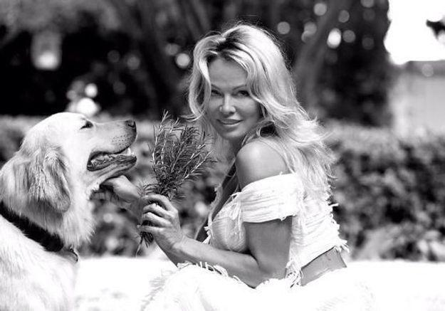 Pamela Anderson et Brigitte Bardot : une amitié inattendue