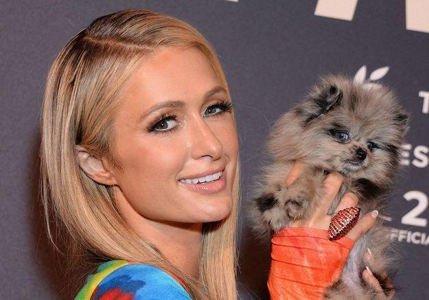 Paris Hilton annonce suivre un protocole de FIV pour devenir maman