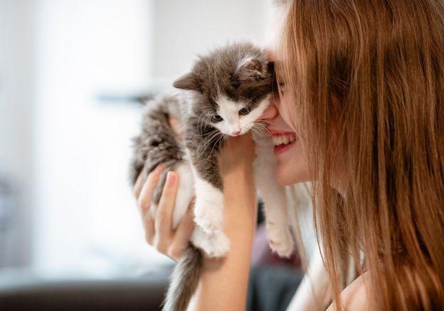 L'édito : « Notre passion pour les chats raconte l'émergence d'une conscience nouvelle. La souffrance des animaux devient intolérable »