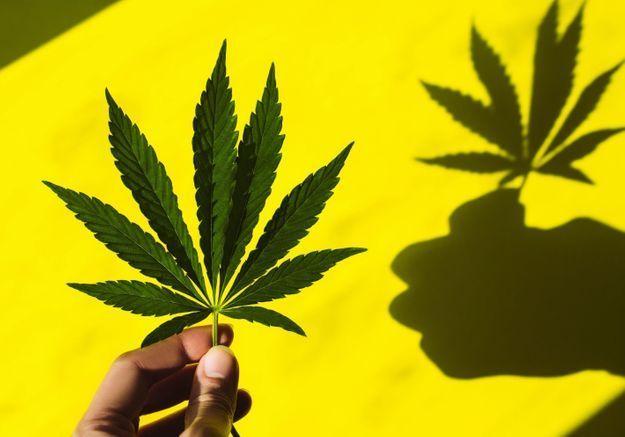 « Pas un seul pays ayant légalisé l'usage du cannabis n'envisage de revenir à la prohibition »