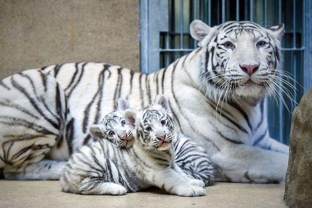 Zoo de Liberec