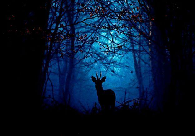 Vive le sauvage ! Ils défendent la nature non domestiquée