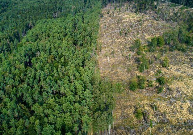 « Un Français détruit en moyenne 352m2 de forêt par an »