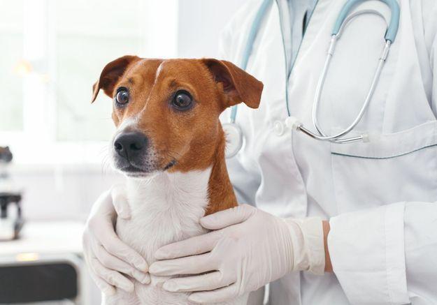 Coronavirus : des vétérinaires s'alarment des cas d'animaux nettoyés avec du gel hydroalcoolique