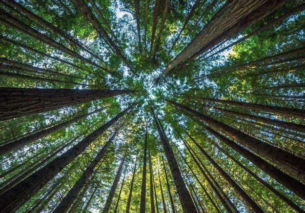 ELLE Green : Ils nous soutiennent pour l'écologie