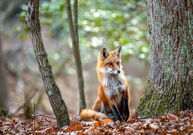 Enquête : Repenser la place des animaux dans le monde